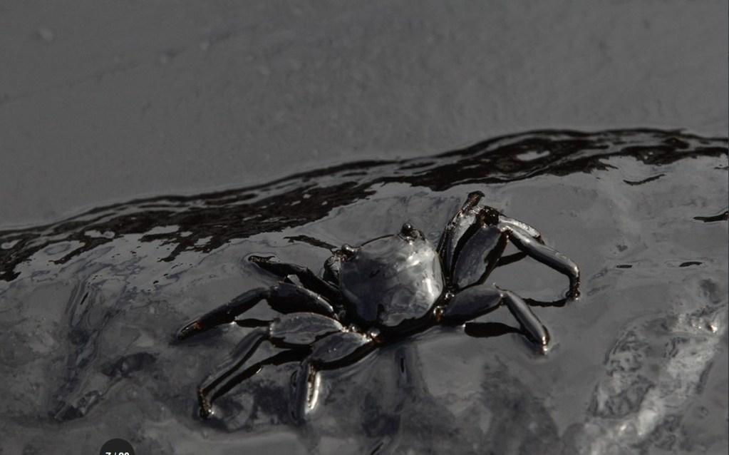 petroleo 1024x638 Fotos   Se fuñe to en playa paradisíaca embarrada de petróleo [Tailandia]