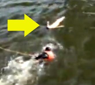 rescate Video   Rescatan mujer bajo el puente Manhattan